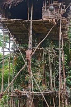 Korowai man climbing onto a treehouse, West Papua