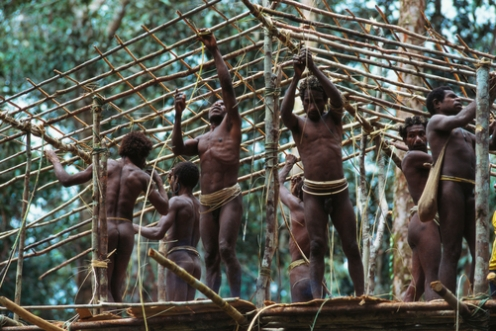 Korowai tribesmen construct a tree house.