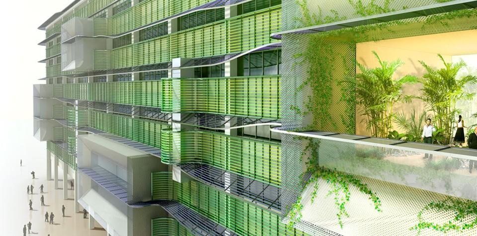 algae-landing-fpo