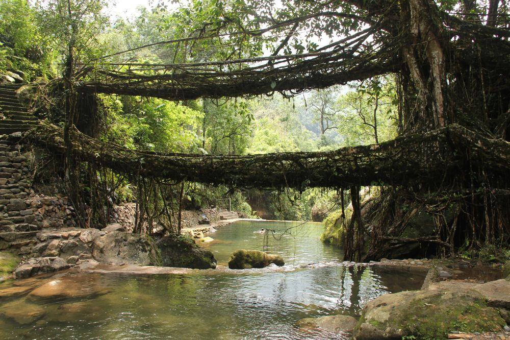Living_root_bridges,_Nongriat_village,_Meghalaya2.jpg