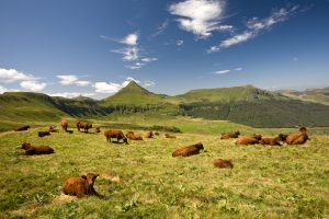 auvergne_cantal_puy_mary_vache_salers-300x200